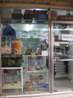 Abrir una tienda de mascotas