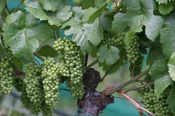 Negocios rentables en Argentina vino