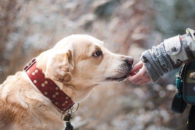 Primeros pasos en el proyecto de una veterinaria