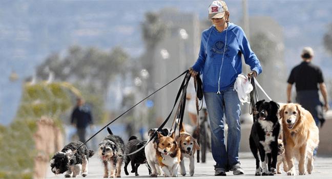 Cuidador de mascotas