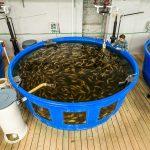 Cómo iniciar un negocio de crianza o cultivo de peces