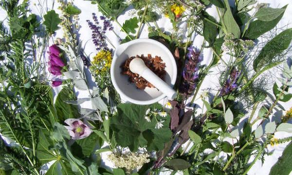 Iniciar un cultivo de plantas medicinales y tener éxito