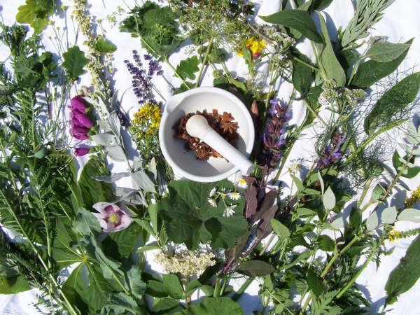 Iniciar un cultivo de plantas medicinales