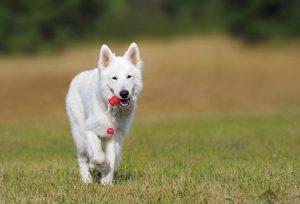 Lanzar una Línea de Accesorios para Mascotas