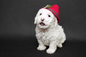 Crear un Antipulgas y Antiparasitario para Mascotas
