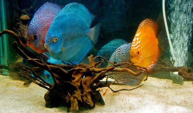 tienda de peces
