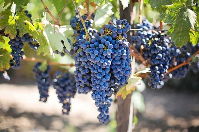 negocios rentables en argentina viñedos