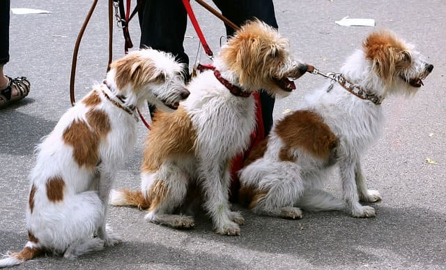 negocio de paseador de perros