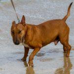 Cómo ofrecer servicio de paseo de perros