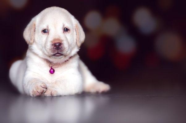 10 Ideas de negocios y servicios para nuestras mascotas
