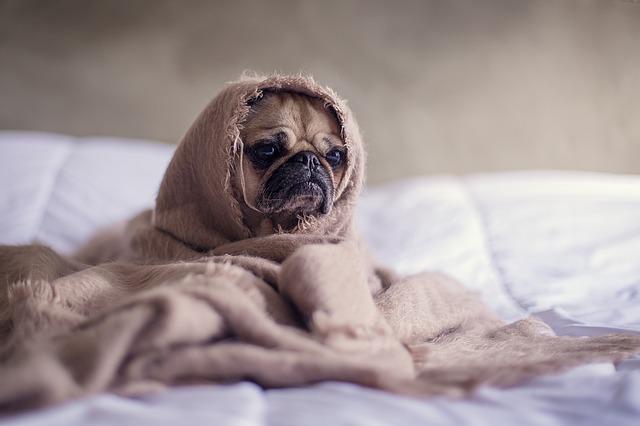casas y camas para mascotas modelo