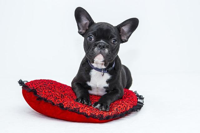 casas y camas para mascotas