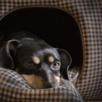 Fábrica de casas y camas para mascotas