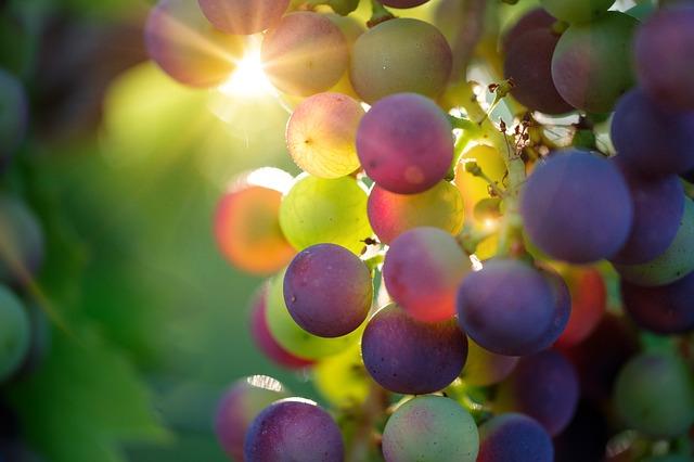 Empresa de vinos