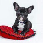 Montar un Negocio diferente de Masajes para Mascotas –  Servicios para mascotas