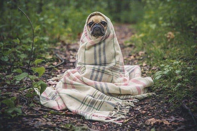 Consejos para ofrecer masajes para mascotas como negocio