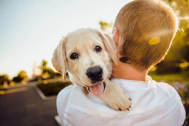 Consejos para tu centro de entrenamiento canino