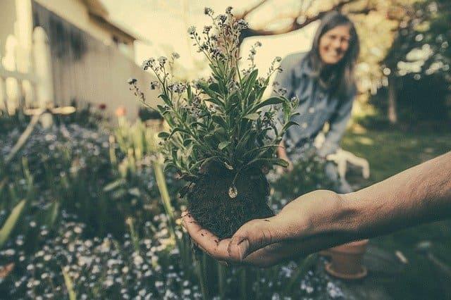 Paso a paso de proyecto de jardinería express