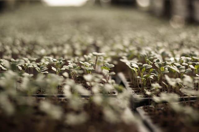 Razones para emprender una huerta orgánica